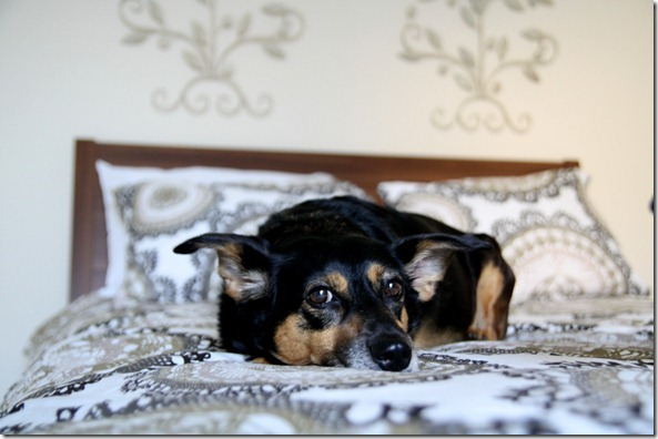 IMG_9022