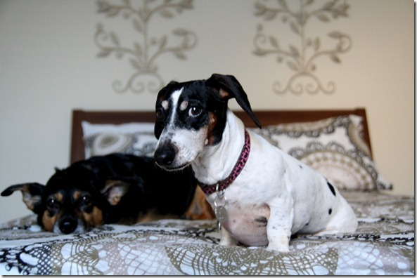 IMG_9024