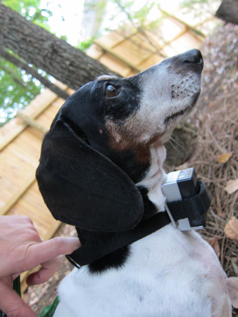 bark stop collar instructions