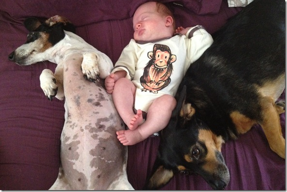 dogs and baby2