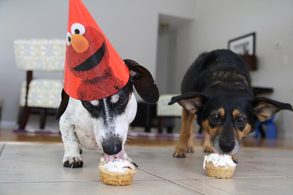 Birthday Cupcakes For Dogs