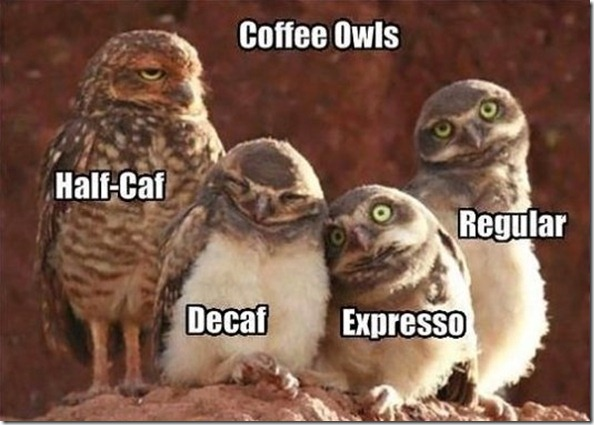 MEME-Coffee-Owls